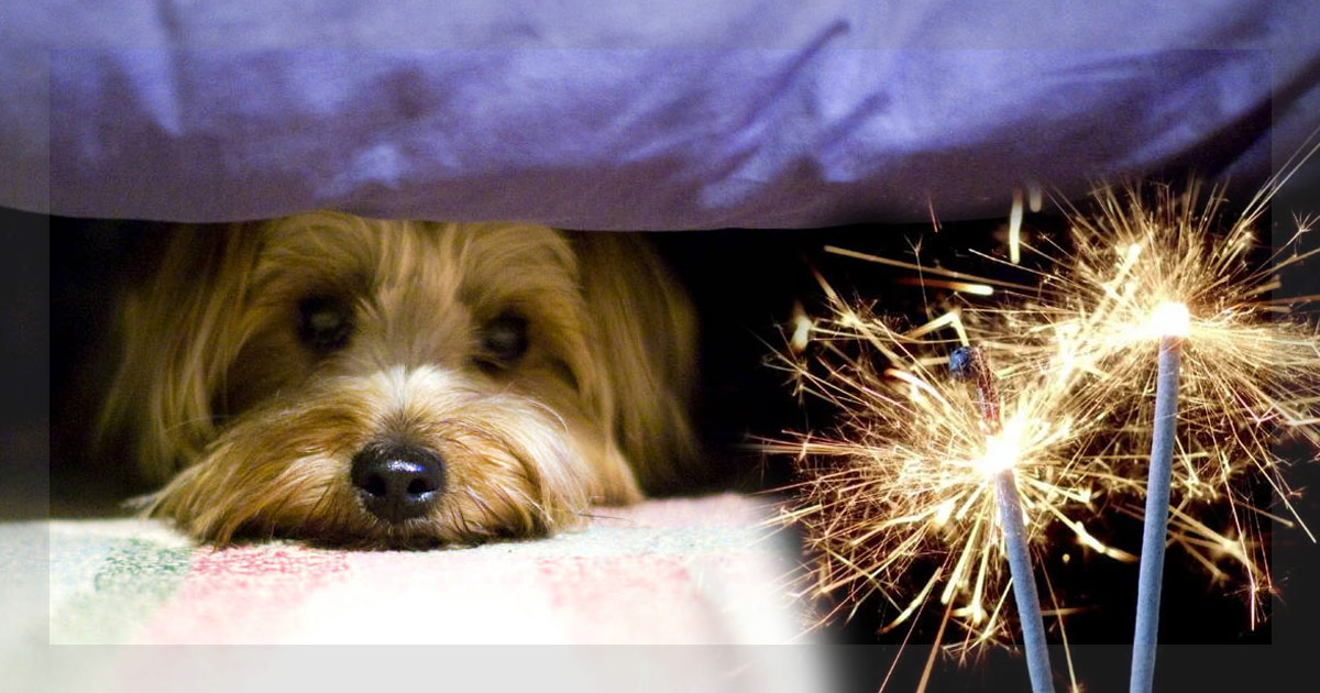 http://www.meranews.in/backend/main_imgs/dog-spot_fireworks-during-diwali_0.jpg