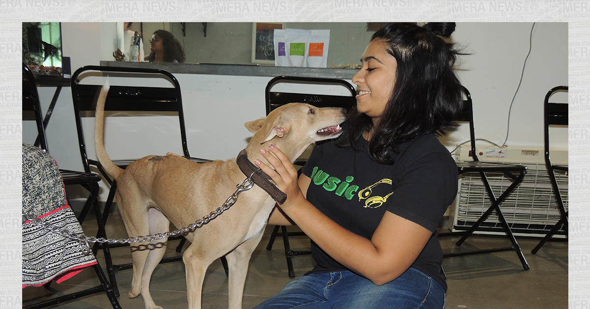 http://www.meranews.in/backend/main_imgs/nidhi_bridging-the-gap-between-dogs-and-their-humans_1.jpg