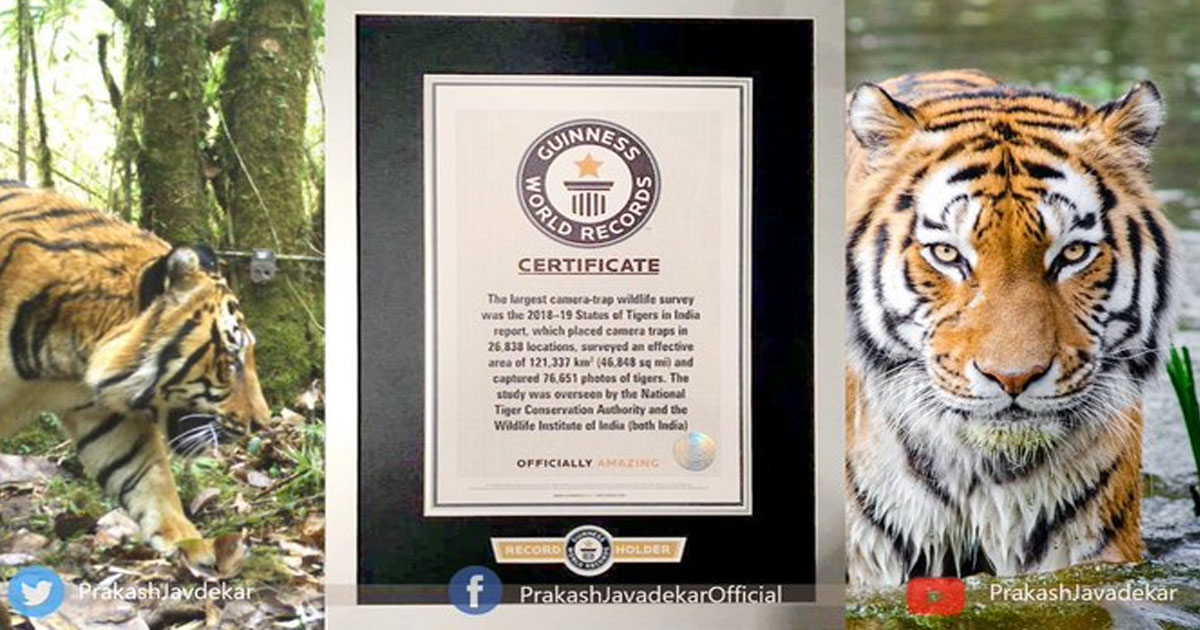 http://www.meranews.in/backend/main_imgs/tiger_census-of-tigers-in-india-set-new-guinness-world-record-for_0.jpg?59